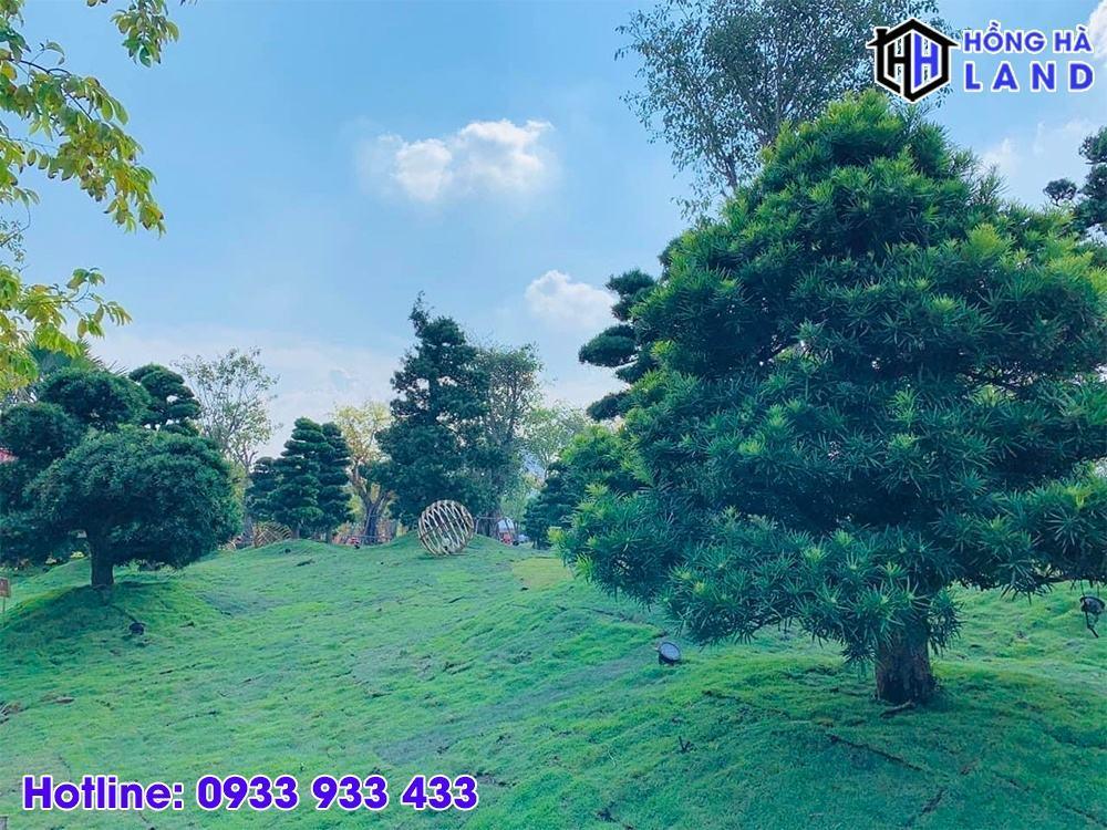 Vườn tùng Phân khu The Origami - Vinhomes Quận 9